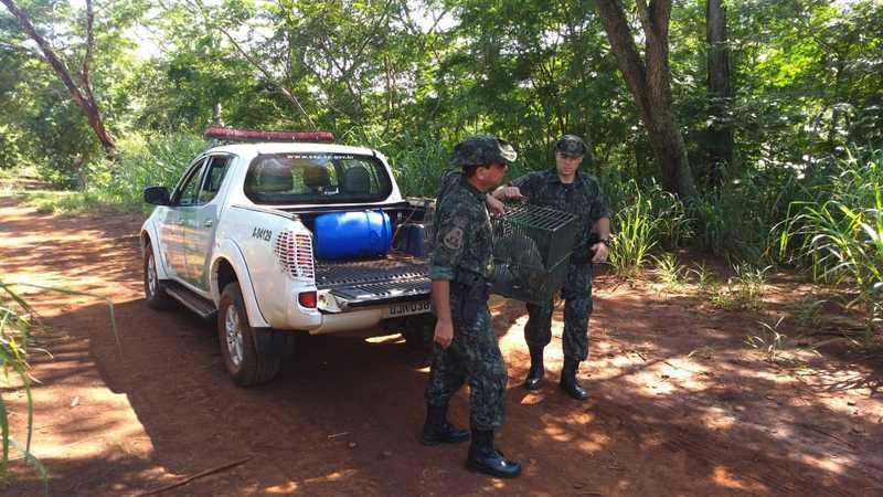 Cachorro-do-mato é capturado em bairro na região central de Rio Preto, SP