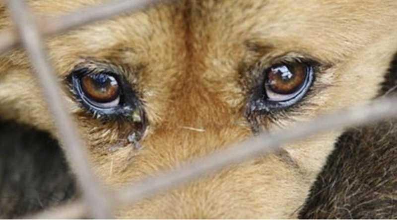 Tupã (SP) poderá ter serviço de disque denúncia contra maus-tratos de animais