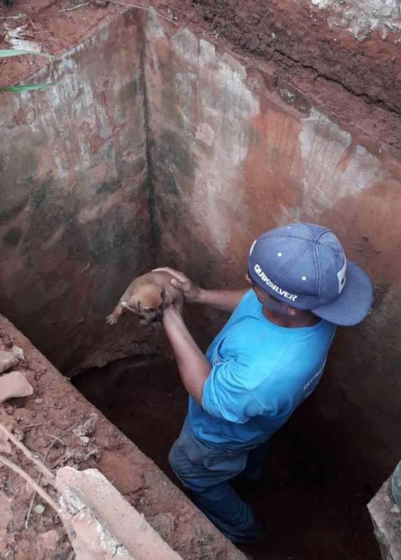 Filhote de cachorro é resgatado após seis dias dentro de bueiro em Tupã, SP; vídeo