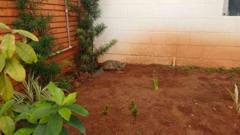 Raposa foi achada em jardim de creche em Tupã, mas as crianças não tiveram contato com o animal — Foto: Corpo de Bombeiros/Divulgação