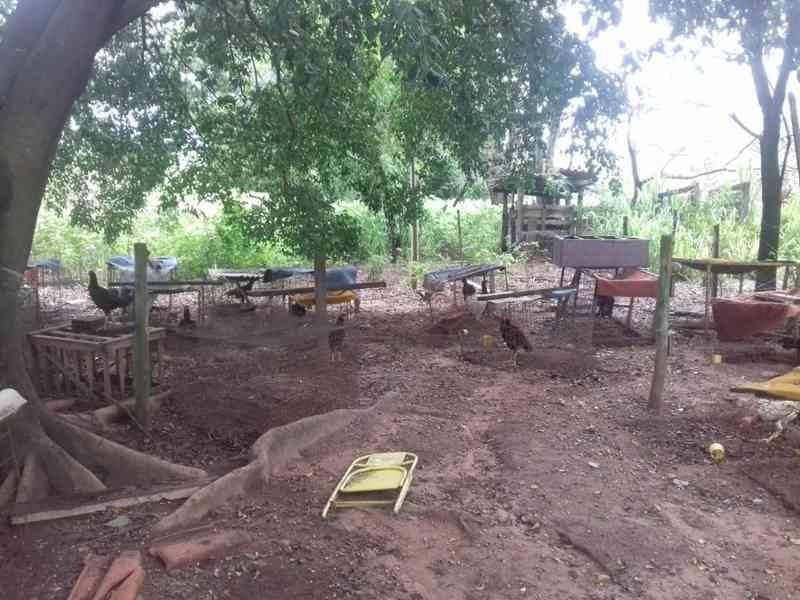 Rinha foi fechada em Tupi Paulista na manhã deste sábado (2) — Foto: Cedida/Polícia Ambiental