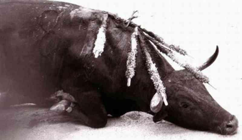 Portugal: Câmara de Santarém gasta 20 mil euros em bilhetes para apoiar touradas