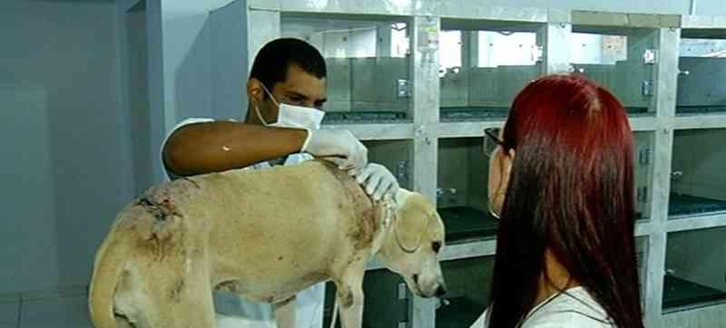 Maus-tratos pode render pena de até 3 anos — Foto: Reprodução/ TV Anhanguera