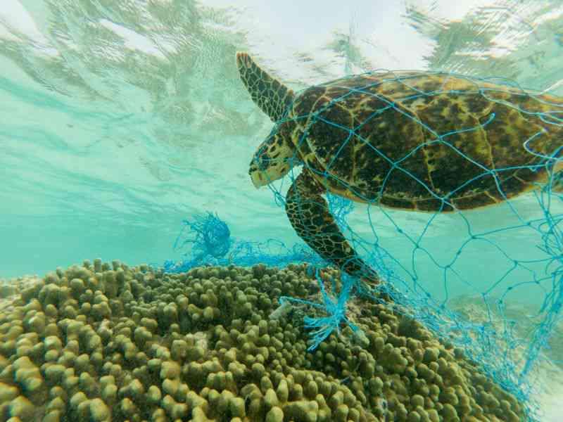 Vida selvagem está em risco e os oceanos são os que mais se preocupam