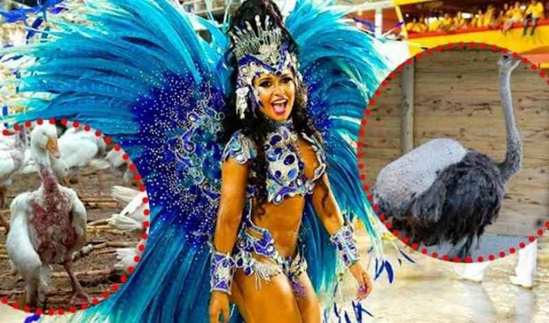 Você não vai acreditar na tortura pela qual essas pobres aves passam em nome do Carnaval