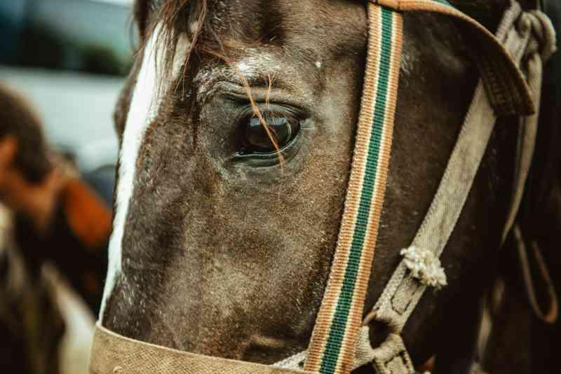 23º cavalo morre logo após o 'novo regulamento de segurança' ser posto em prática em hipódromo nos EUA