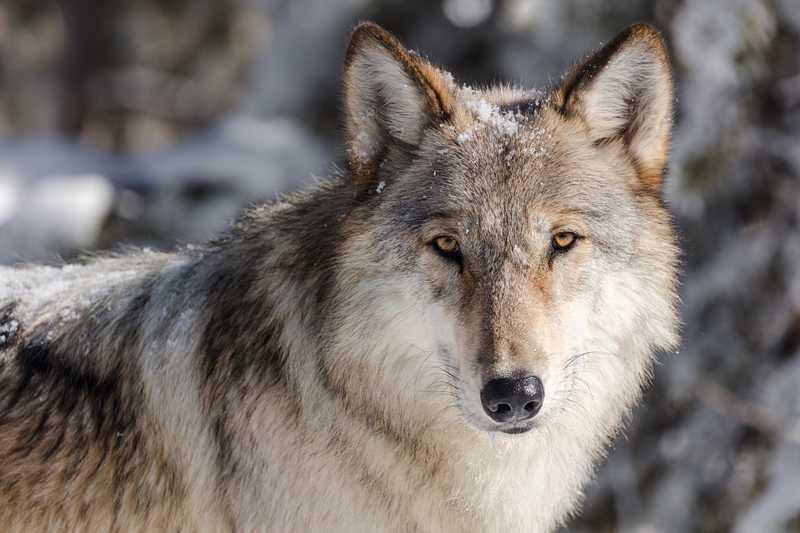Animais não terão mais a pele extraída Foto: Pixabay
