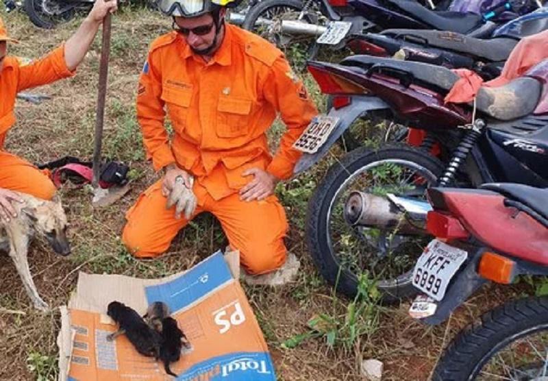 Vídeo: filhotes são resgatados de buraco em delegacia de Santana do Ipanema, AL