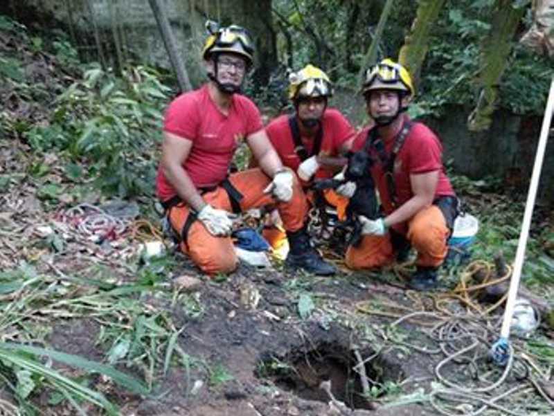 Cadela é resgata após cair em fossa desativada no Barro Duro, em Maceió