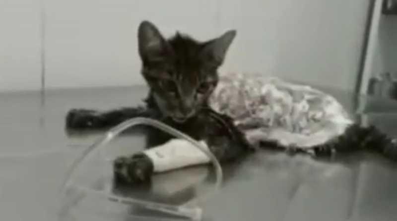 ONG de Alagoas pede ajuda para custear tratamento de gata esfolada viva