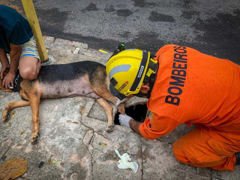 Bombeiros resgatam cadela presa em caixa de gordura no Sertão de Alagoas