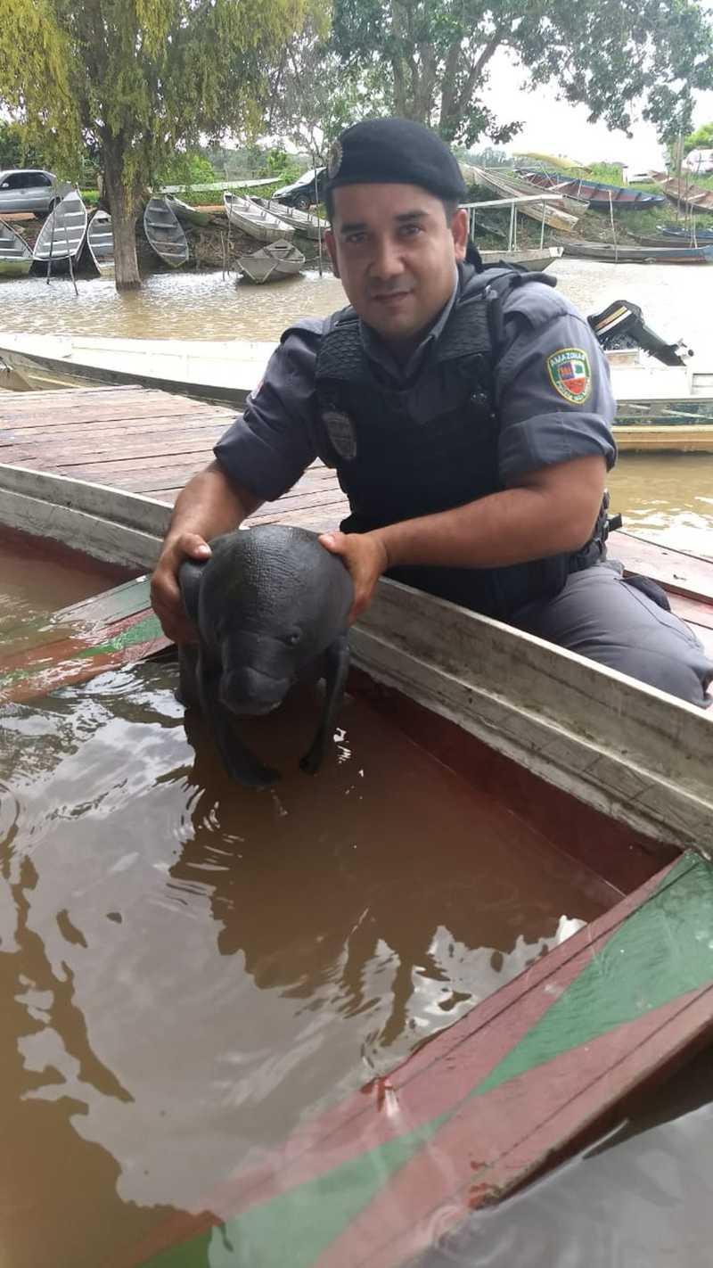 Filhote de peixe-boi é resgatado em rio no interior do AM