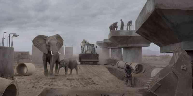 A invasão humana, a maior ameaça ao mundo animal na África