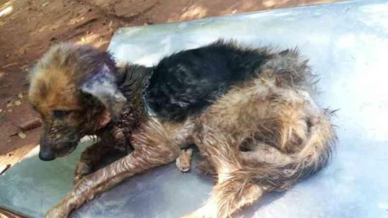 Polêmica na Argentina: cachorrinha mantida em condições deploráveis é resgatada, mas morre uma hora depois do resgate