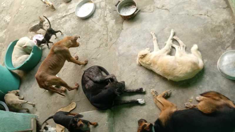 Grupo de proteção de animais em Amargosa (BA) precisa de ajuda para cuidar dos animais