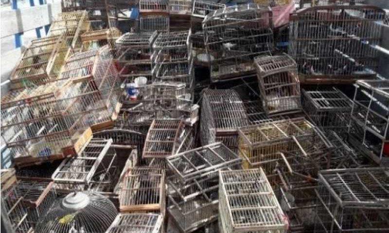 700 animais mantidos em cativeiro são resgatados em Juazeiro (BA) e mais 10 municípios