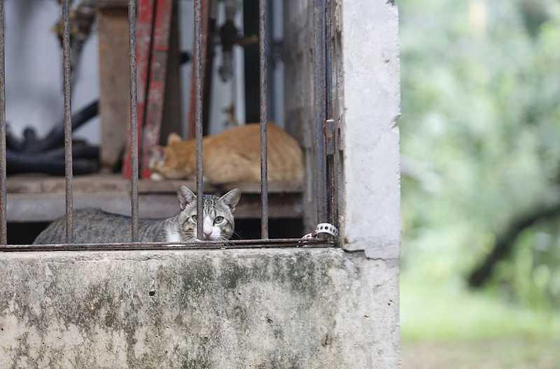 UFBA investiga aparecimento de sete gatos mortos; três foram envenenados