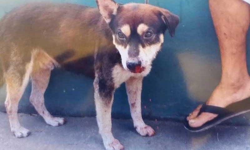 Cachorro é espancado por segurança de centro comercial em Simões Filho, BA