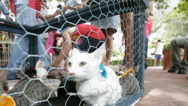 A Coordenadoria Estadual de Proteção Animal poderá ainda estabelecer parcerias e firmar convênios com entidades de proteção animal e outras organizações não governamentais e governamentais - FOTO: JOSÉ LEOMAR