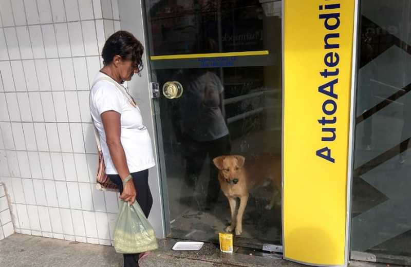 Cachorro fica preso em agência bancária durante toda a noite e mobiliza moradores no Crato, interior do Ceará