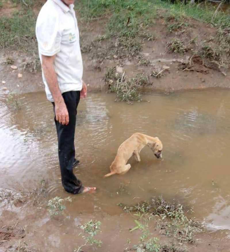 Cadela é resgatada após ficar soterrada às margens do Rio Salgado em Icó, CE
