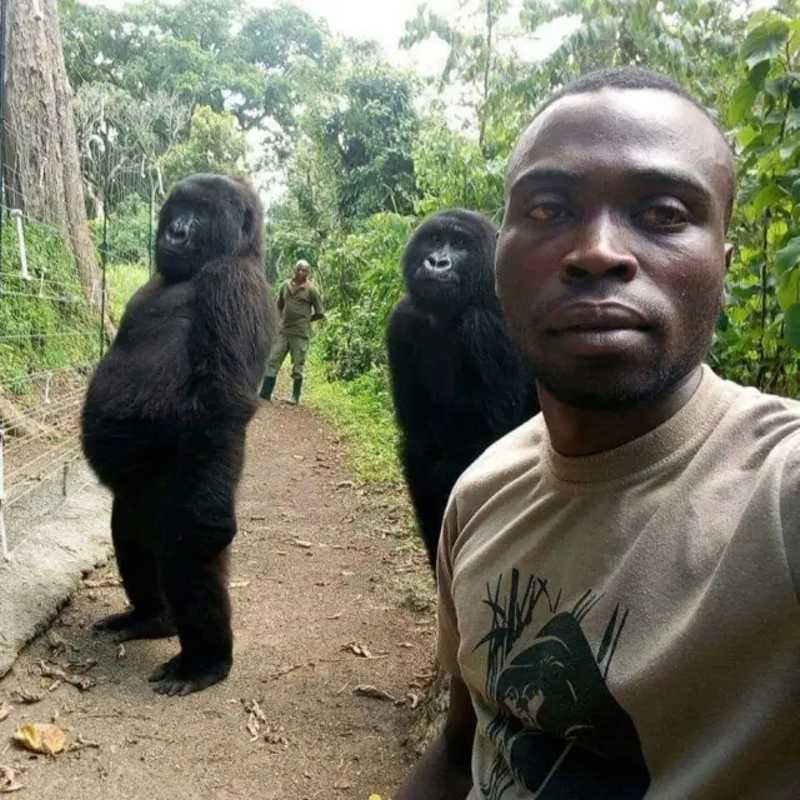 Gorilas posam para 'selfie' ao lado de guardas que os protegem de caçadores