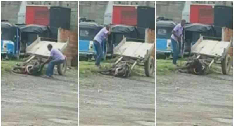 Cavalo perdeu um olho porque seu tutor não parava de maltratá-lo, na Colômbia