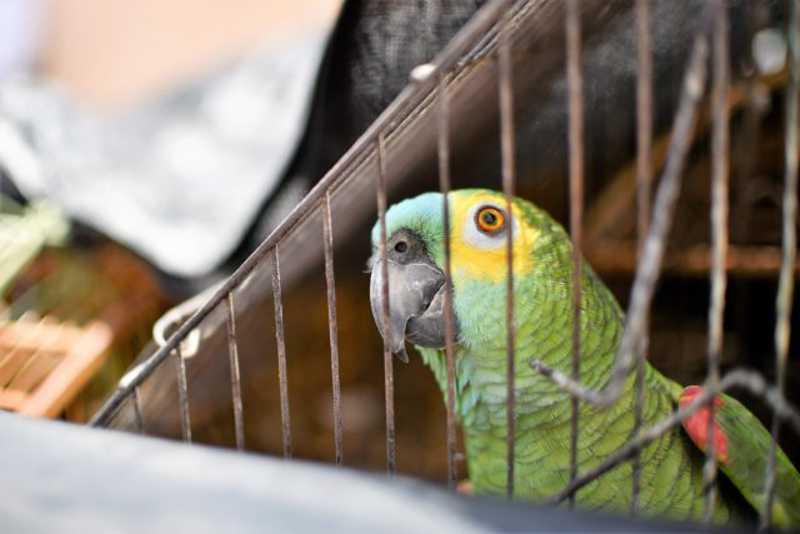 Batalhão Ambiental apreende mais de mil animais silvestres no Distrito Federal