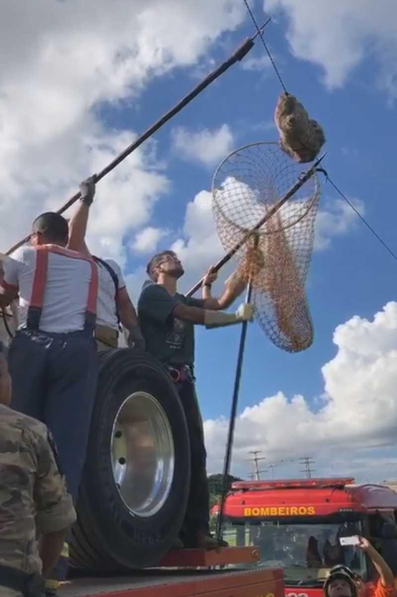 Animal estava pendurado em um fio de telefonia — Foto: TV Globo/Reprodução