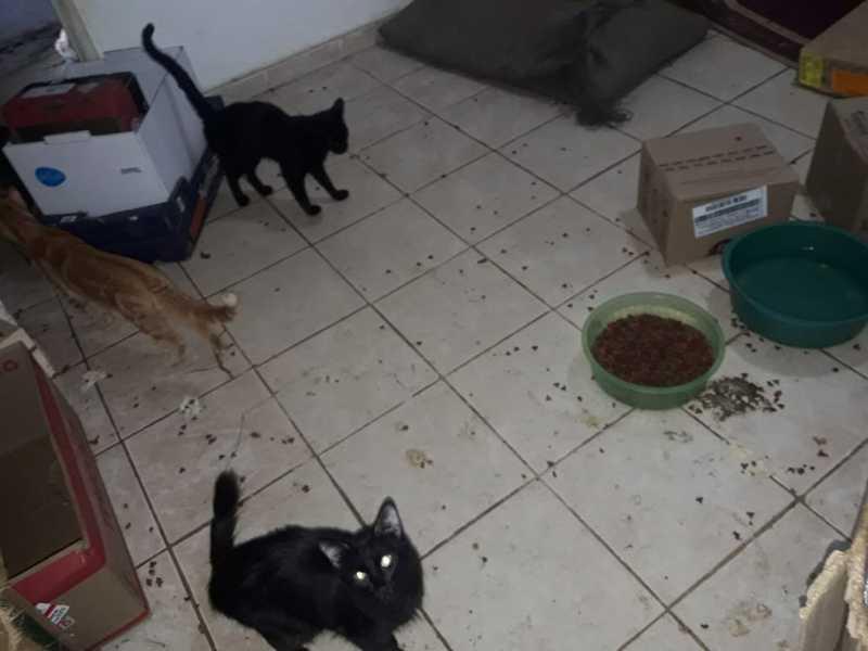 Casa com mais de 70 gatos em situação de maus-tratos, no DF, é descoberta pela polícia — Foto: Batalhão de Polícia Militar Ambiental do DF/Divulgação