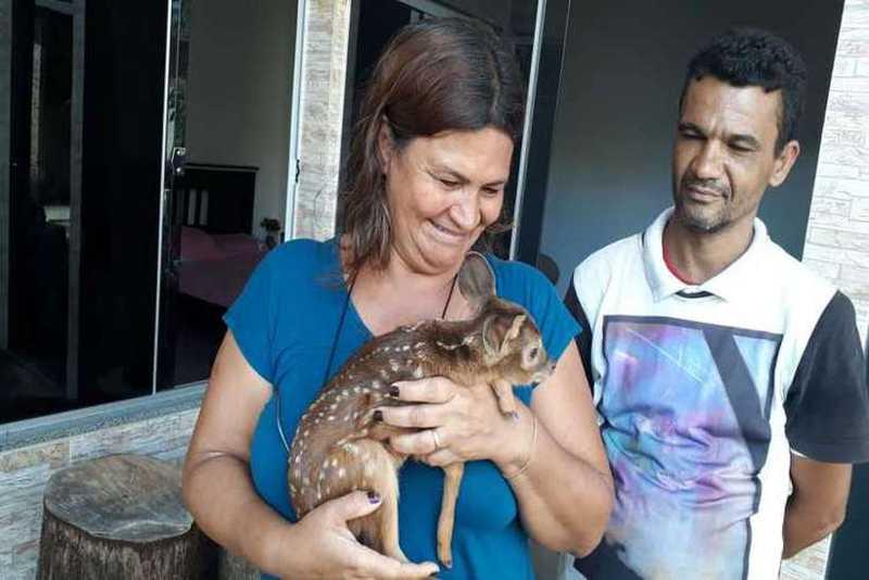 Filhote de veado é resgatado por casal em Planaltina, DF