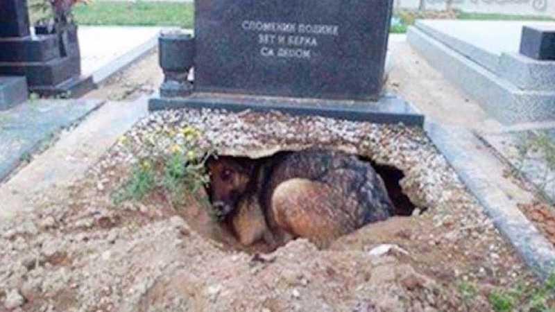 Cachorro cava buraco no túmulo do tutor para ficar mais perto dele