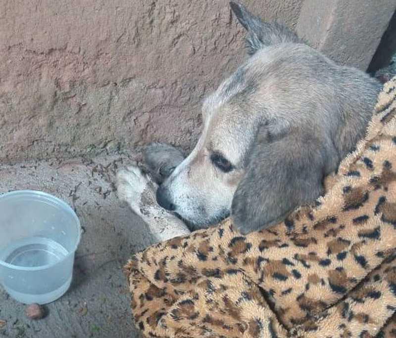 Voluntários denunciam casos de envenenamento de cães de rua em Ibatiba, ES