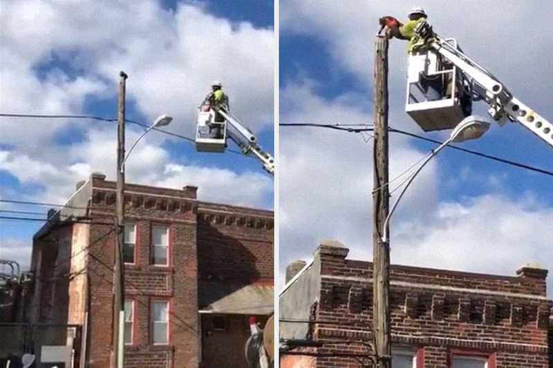 Homem é punido no trabalho após resgatar gatinha de cima de um poste