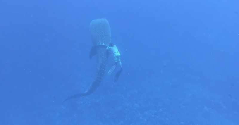 Vídeo mostra momento em que família salva tubarão durante mergulho