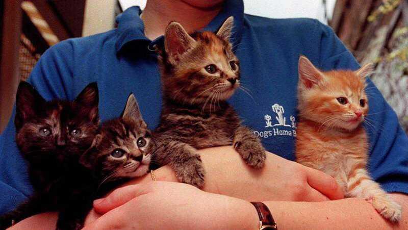 Departamento de Agricultura norte-americano não utilizará mais gatos para estudar a toxoplasmose. Animais eram eutanasiados depois de serem infetados.