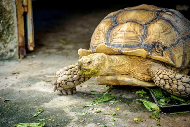 Tartaruga tem chance de viver sem plástico