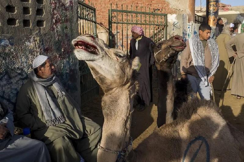 Ao lado das maravilhas do Egito, animais sofrem maus-tratos