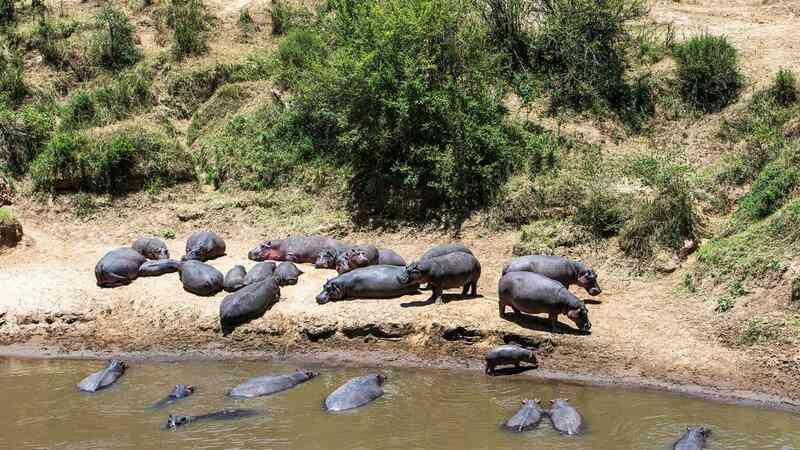 28 hipopótamos encontrados mortos em parque nacional da Etiópia