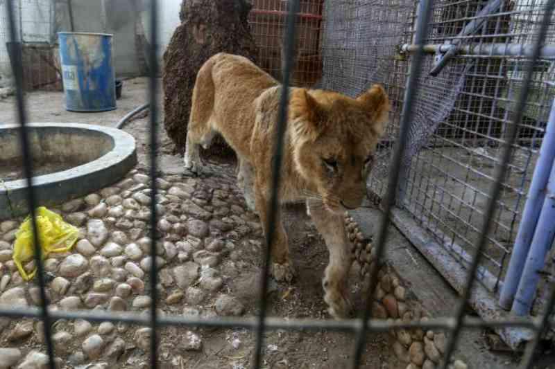 Animais em péssimas condições são retirados de zoológico na Faixa de Gaza