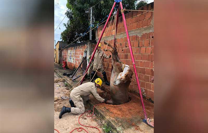 Bombeiros resgatam égua de fossa com três metros de profundidade em Águas Lindas, GO