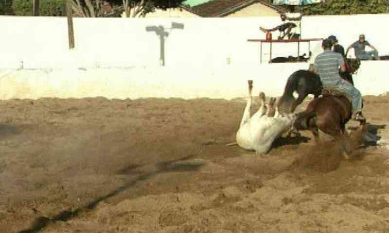 Vergonhoso: Caiado sanciona lei que regulamenta vaquejada como atividade cultural em Goiás