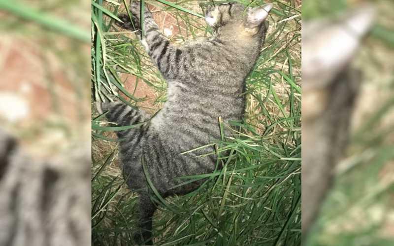 Morador resgata animais doentes e denuncia suspeita de envenenamento, em Goiânia