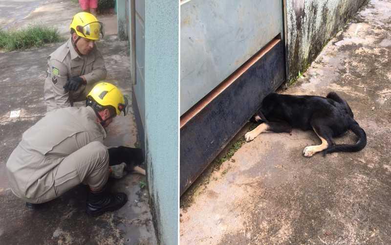Corpo de Bombeiros resgata cachorro que ficou com cabeça presa em portão, em Goiânia
