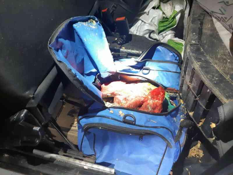 Trio é flagrado transportando 60 animais silvestres dentro de carro de passeio na BR-153