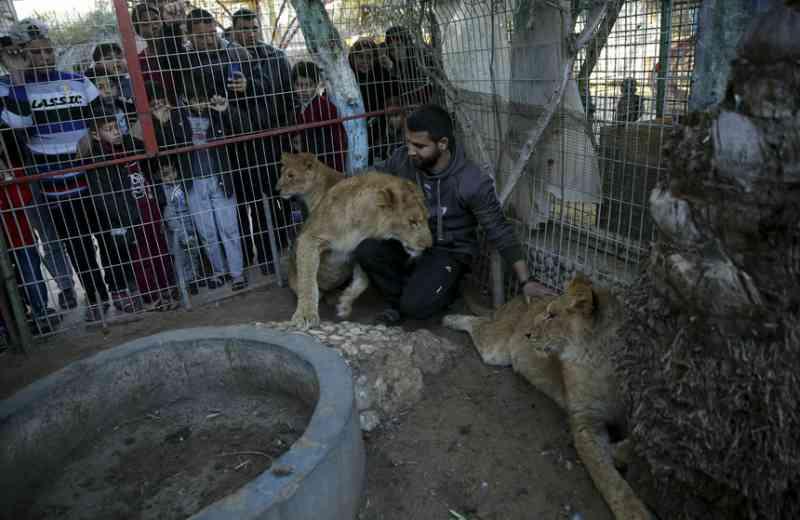 Violência suspende resgate de animais do mais antigo Zoo de Gaza