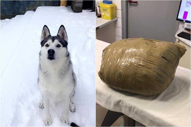 Em canil, cadela morre e tutora recebe o animal enrolado em fita adesiva