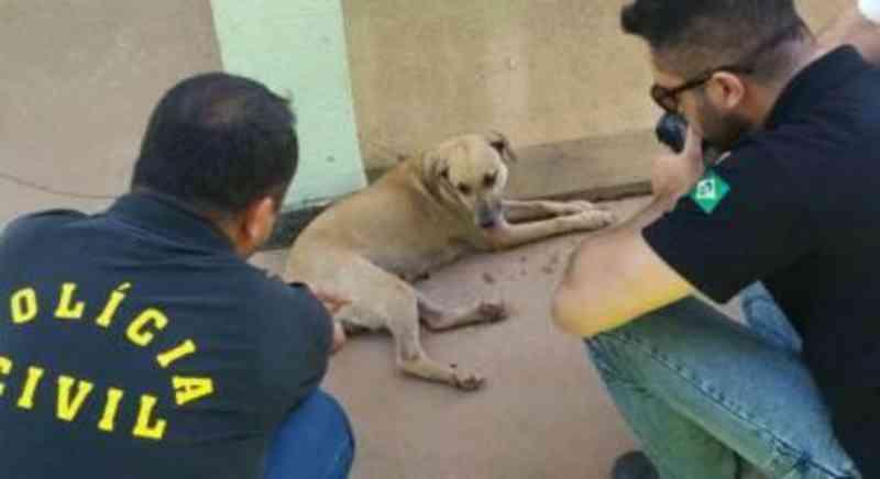 Juiz marca audiência para acusado de violentar cadela em Cuiabá, filmar e espalhar vídeos