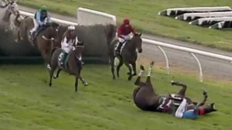 Cavalos de corrida que se machucam são sufocados até a morte