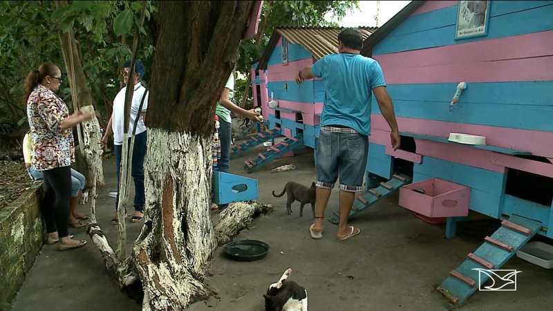 Animais abandonados são alvos de maldades em São Luís — Foto: Reprodução / TV Mirante